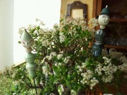les Timo, tuteurs de jardin, déco de plantes