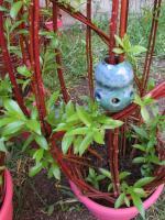 sculpture végétale avec boules ovales en grès