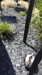 boules noire et blanche en argile