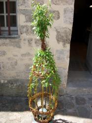 sculpture végétale avec boule grès verte