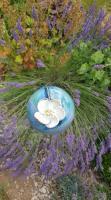Tuteur boule fleur dans son jardin