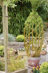 sculpture végétale dans pot grès rose