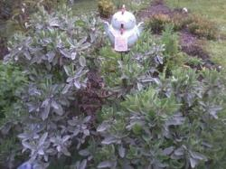 Antoinette tablier tuteur de jardin en grés