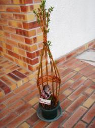 sculpture végétale avec escargot