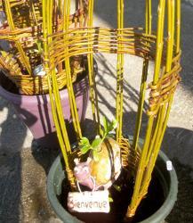 escargot rose dans sculpture végétale