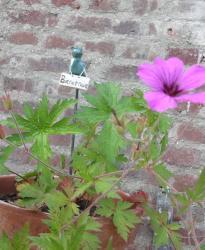 Escargot en grès pour décorer une jardinière