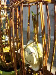 Fleur jaune dans sa cage d'osier vivant en mars 2014
