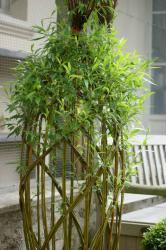 sculpture végétale en osier vivant