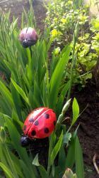 les coccinelles Lola - tuteurs de jardin