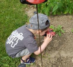 Lola la petite coccinelle avec le petitgarçon dans le jardin