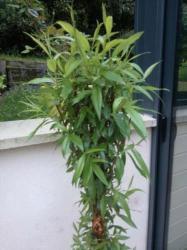 feuilles d'osier sur le haut de sculpture végétale