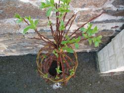 sculpture végétale avec pichet et 2 tasses roses