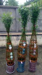 sculptures végétales en osier vivant