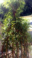 même sculpture végétale même mois