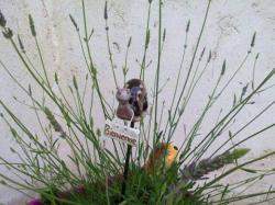 Zozo, l'escargot en terre sur tuteur